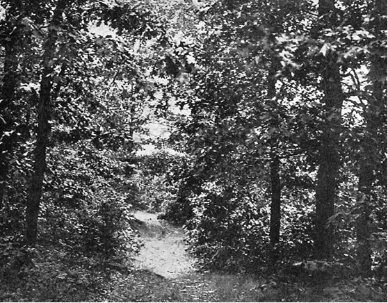 Nineteenth-century photo of an old Indian trail in Milton.